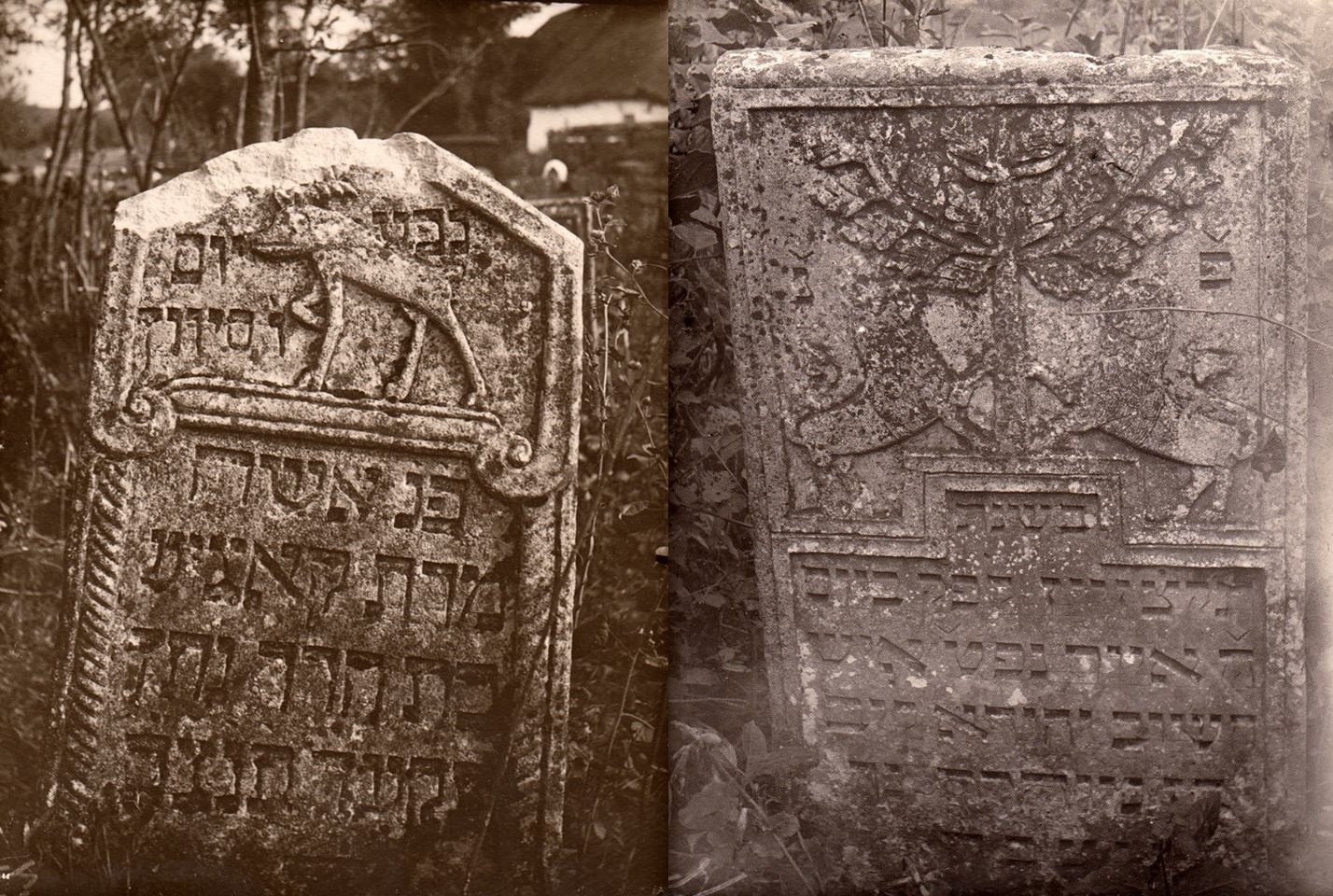 Gravestones in Liantskorun Jewish cemetery, 1930's. Photo from the collection of Pavlo Zholtovskiy.